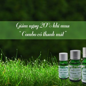 Combo tinh dầu cỏ chai